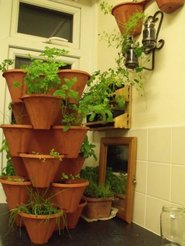 Indoor Tea Garden Making a herbal tea garden home plant remedies plants for a tea garden workwithnaturefo
